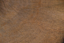 Isolated Wood Texture Of Oak Close-up. Trees Annual Rings. Copy Space.