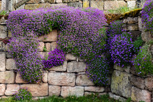 Purple Flowers On The Wall