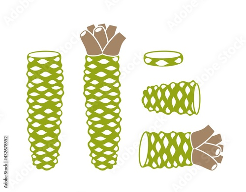 Fotografia Wasabi root  logo. Isolated wasabi root on white background