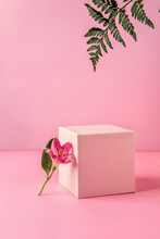 Pastel Pink Podium To Show Cosmetic Products With Fern Leafs And Flowers Alstroemeria On Pink Background.