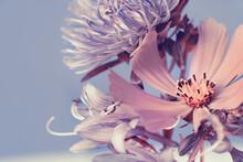 Garden Flowers, Purple Bouquet, Blue Background. Studio Photography.