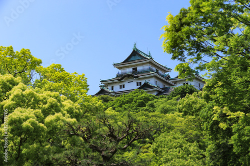 Canvas 新緑の和歌山城 和歌山県、日本