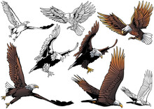 Set Of Flying Bald Eagle As Hand Drawn Illustrations Isolated On White Background, Black And White And Colored Birds,Vector Graphic