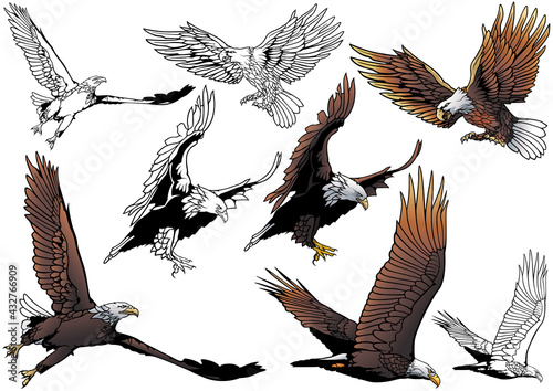 Foto Set of Flying Bald Eagle as Hand Drawn Illustrations Isolated on White Backgroun