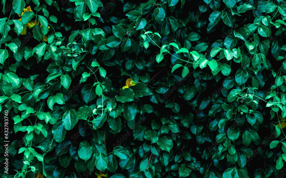 Obraz Full Frame of Green Leaves Texture Background. tropical leaf fototapeta, plakat