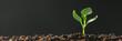 Leinwandbild Motiv Green seedling growing on the ground in the rain