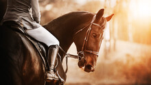 A Beautiful Bay Horse With A Rider In The Saddle Stands Half-turned Against The Background Of Trees, Illuminated By The Rays Of The Setting Sun. Horse Riding.