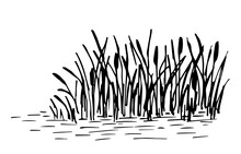 Simple Hand-drawn Vector Drawing In Black Outline. Lake Shore, Reeds, Calm Water, River Plants, Swamp. Nature, Wild Landscape, Duck Hunting, Fishing.