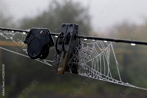 Foto spider web with dew drops