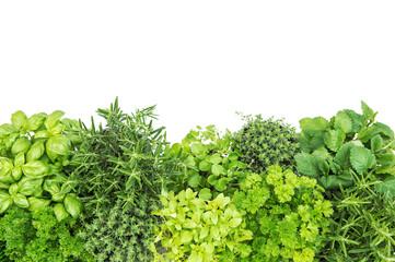 Fresh herbs. Basil rosemary thyme mint parsley white background
