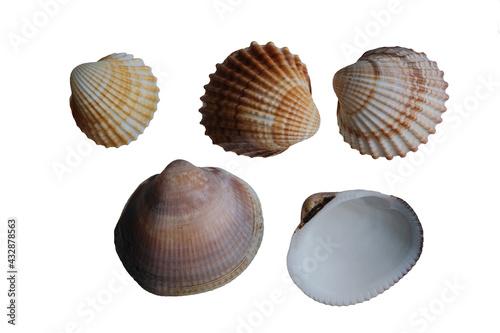 Foto collection of seashells