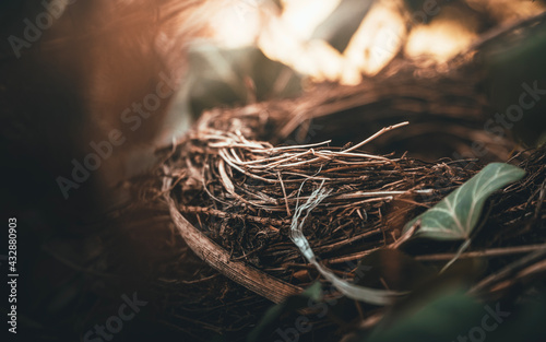 Ptasie gniazdko w blasku słońca