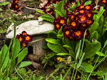 Decorative Toad Stool Shaped Frog House