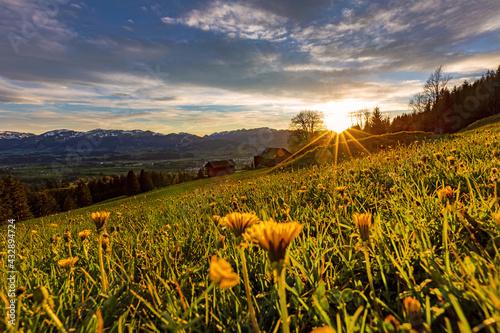 Canvas Allgäu - Löwenzahn - Frühling - Blumen - Alpen - Sonnenuntergang