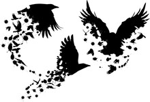 Three Flying Crows From Birds And Blots Isolated On White