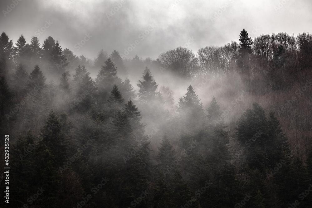 Dark forest in the mist, Bieszczady Mountains, Poland