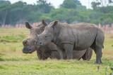 Portrait of Rhino in the Nature