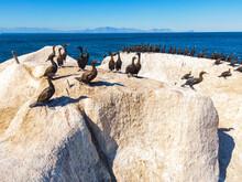 Cape Cormorants Sitting On The Rock Near Sea