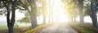 Leinwandbild Motiv Single lane rural road (alley) through deciduous oak and maple trees. Natural tunnel. Sunlight, sunbeams, fog, shadows. Fairy autumn scene. Hope, heaven concepts. Nature, ecology, walking, cycling