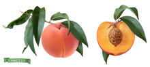Peach Fruits And Leaves, Botanical Illustration. 3d Realistic Vector Objects
