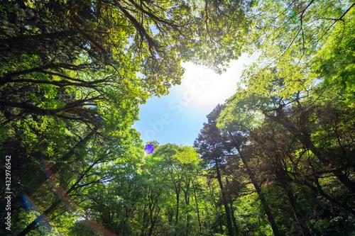 Foto 5月新緑の菊池渓谷【熊本県菊池市】