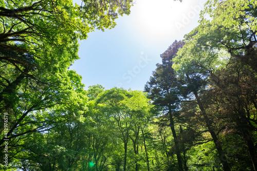 Leinwand Poster 5月新緑の菊池渓谷【熊本県菊池市】