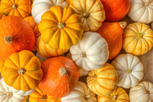 Full Frame Of Ripe Whole Colorful Pumpkins On Beige Background