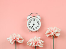 Flat Lay Of White Vintage Alarm Clock  With Pink Flowers Decoration  On Pink Background.