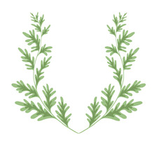 Wormwood Herbaceous Frame On A White Background. Template With Grass Fields. Wreath With A Branches Of Sagebrush. Vector Natural Card With Artemisia Absinthium