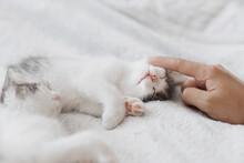 Hand Caressing Cute Sleeping Little Kitten On Soft Bed. Adoption. Sweet Kittens Lying On Blanket