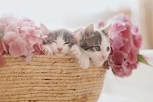 Cute Little Kittens Sleeping In Basket With Beautiful Pink Flowers. Two Kitties Napping In Flowers