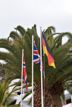 Three National Flags On Poles In Front Of Palm Tree