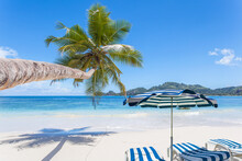 Cocotier Penché, Transats Et Parasol Sur Plage Paradisiaque Des Seychelles