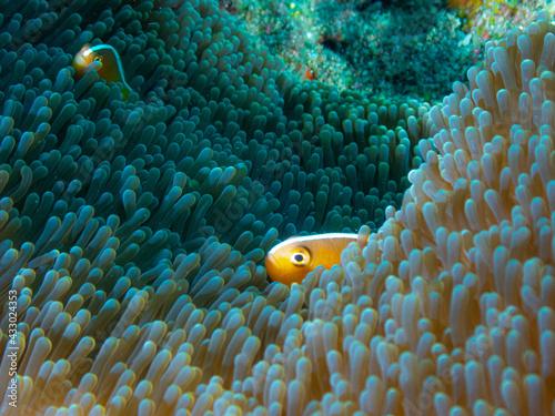Fényképezés Ocean life of the philippines