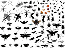 Many Insect Silhouettes Isolated On White