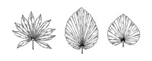 Set Of Hand Drawn Dried Palm Tree Leaves Isolated On White. Vector Illustration In Sketch Style