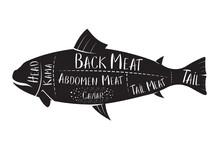 Butcher's Guide - Fish - Vector Illustration