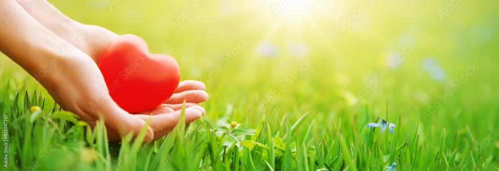 Obraz Woman hands holding red heart shape on the green grass background. fototapeta, plakat