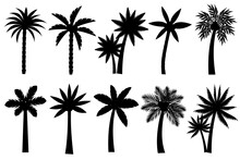 Collection Of Black Coconut Trees Icon. Can Be Used To Illustrate Any Nature Or Healthy Lifestyle Topic.