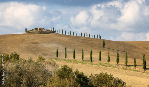 Naklejka premium Typical Italian farmland with cypress alley and wheat and barley fields in Siena, Tuscany. Italy