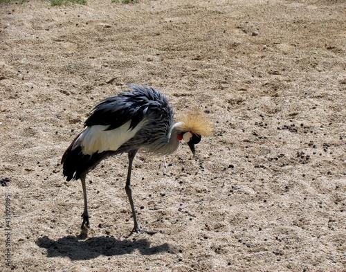 Naklejka premium oiseau
