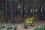 kwiaty drzewa natura widok zieleń wiosna