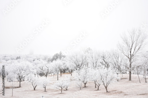 Photo Frosty Trees