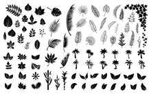 Leaves Silhouettes. Black Leaf, Palm Tree Foliage. Isolated Flat Planting Collection. Forest, Exotic Palms And Ivy Vector Bundle