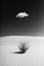 Ein Strauch Alleine In Der Wüste Bei Blauem Himmel Und Weißem Sand Mit Einer Einzelnen Wolke Am Himmel In Schwarz Weiß