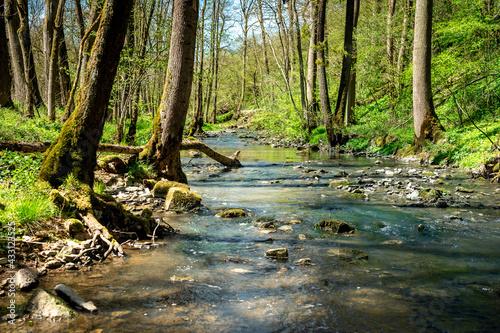 Canvas Fluss Schandtauber im Frühling bei Rothenburg