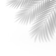 Palm leaf shadow overlay effect. Abstract background with tropical leaves shadows. 3d rendering