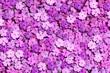 Leinwandbild Motiv Blumen 1360