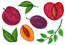 Watercolor Plum Set Isolated On White Background. Chinese Plum And Prune Damson Fruit Whole And Halved With Pit And Leaves For Unique Print Composition. Hand Drawn Colorful Illustration.