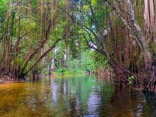 Cypress Swamp River In Florida